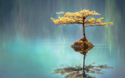 Meditazione di gentilezza e accettazione