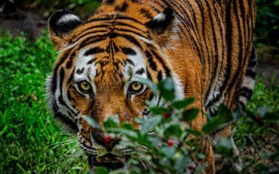 Riflessioni di Dharma sulla rabbia e la sua trasformazione