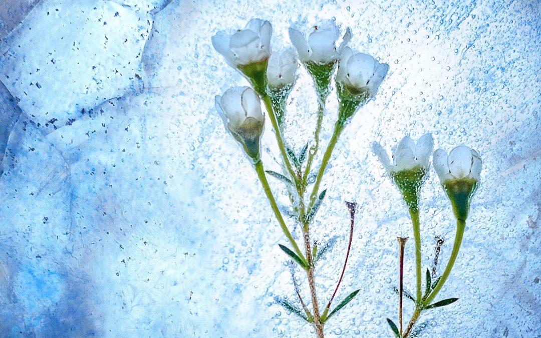 Ep. 61 Meditazione guidata sull'apprezzare gli eventi della vita
