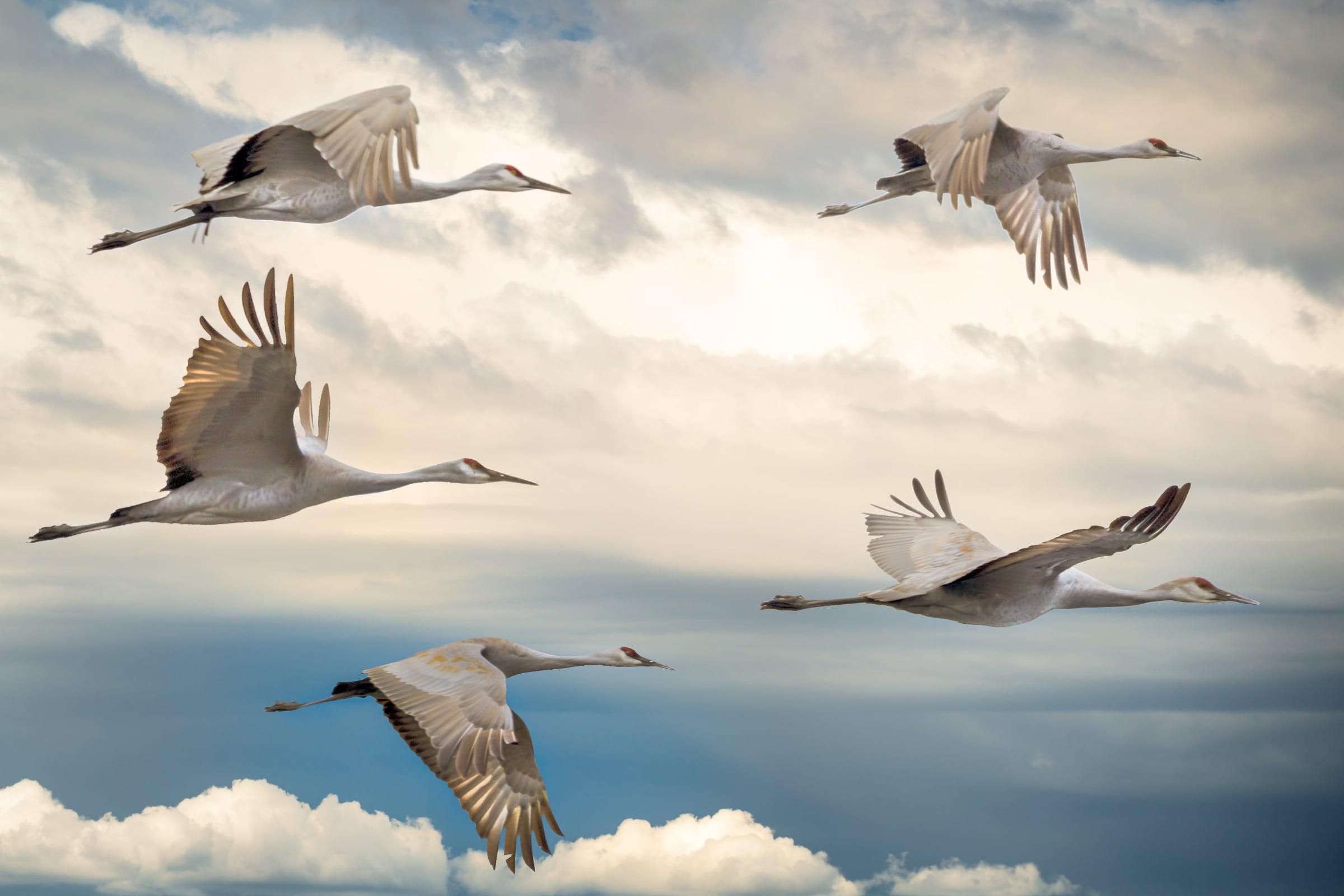 Uccelli come mente